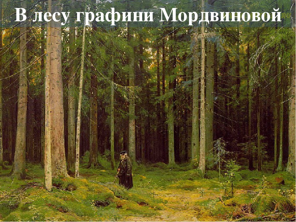 В лесу графини Мордвиновой. Петергоф